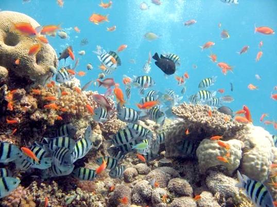 очистити воду в акваріумі