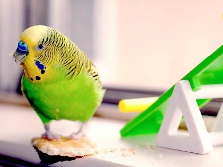 Як годувати птахів