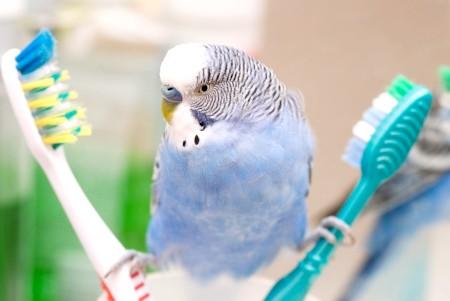 як міті птахів