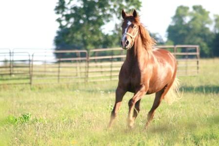 як про'їздити коня