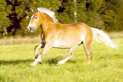 як зрозуміті кінь