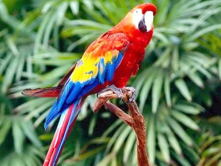 лікувати папуги