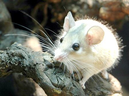 як зробити самій клітку для миші